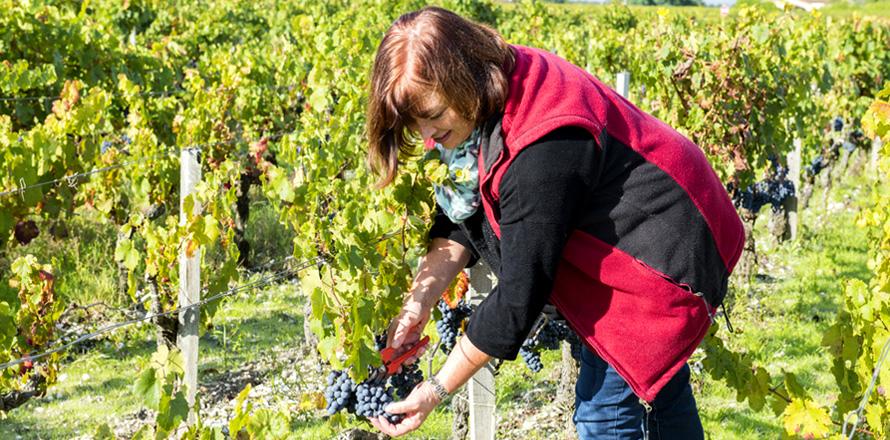 Les Vignobles Alain Roses - Château Grand Tayac Margaux - Château Hau Bellevue Moulis - Bordeaux - Mme Roses - 01