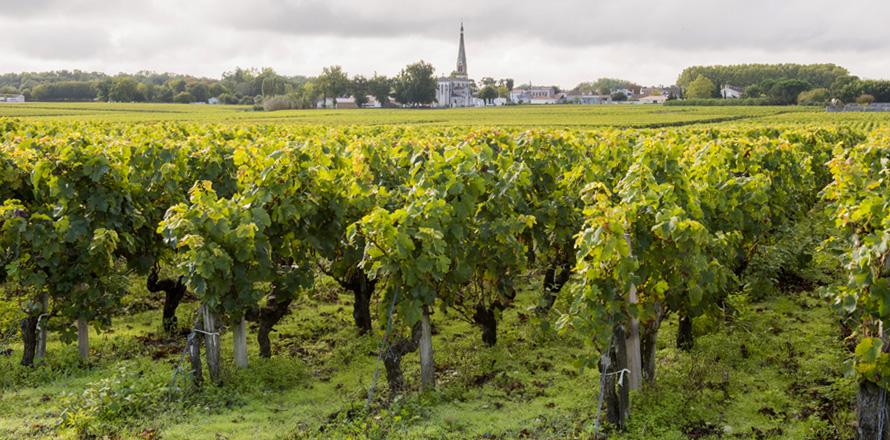 Les Vignobles Alain Roses - Château Grand Tayac Margaux - Château Hau Bellevue Moulis - Bordeaux - vignes et clocher